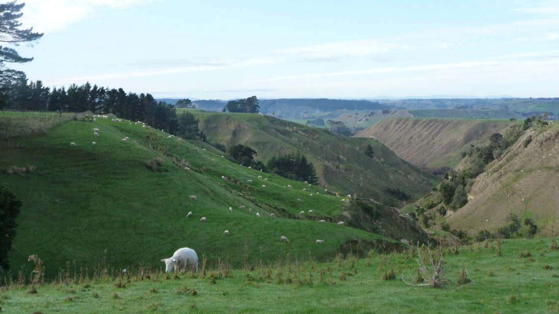 Culture et rencontres entre moutons et camions : Du 30 mai au 8 juin (Wellington > New Plymouth)